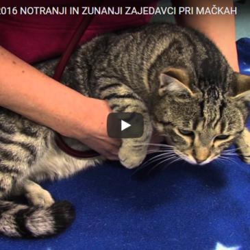 Notranji in zunanji zajedalci pri mačkah