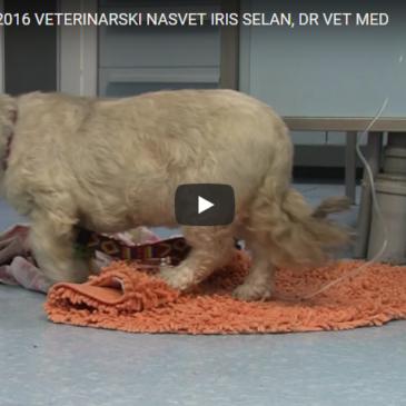 Veterinarski nasvet – Iris Selan dr. vet. med.