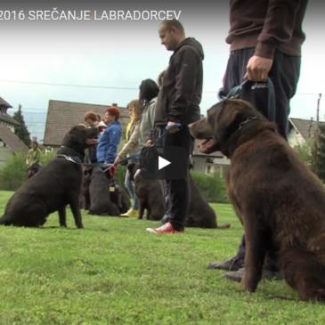 Srečanje labradorcev