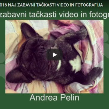 Naj zabavni tačkasti video in fotografija