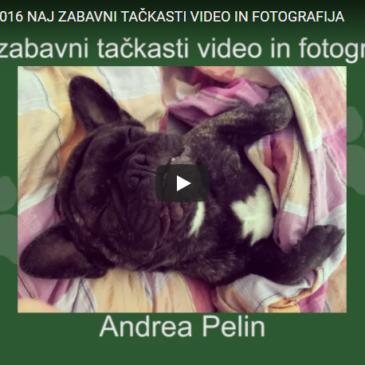 Naj zabavni tačkasti video in fotografija