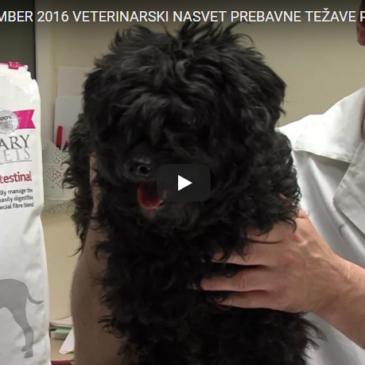 Veterinarski nasvet – prebavne težave pri psih