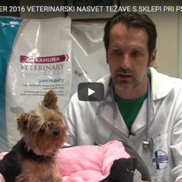 Veterinarski nasvet – težave s sklepi pri psih