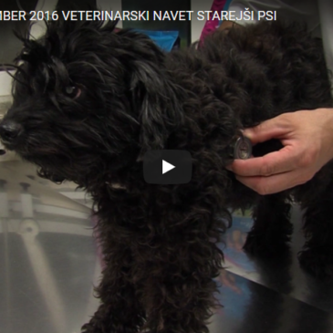 Veterinarski nasvet – starejši psi