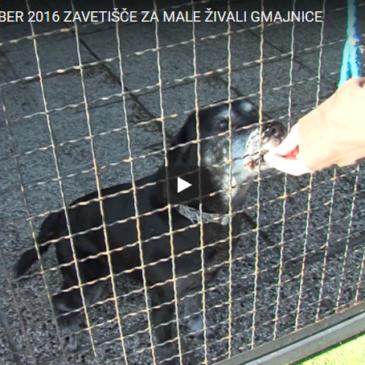 Zavetišče za male živali Gmajnice