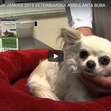 Veterinarska ambulanta Buba