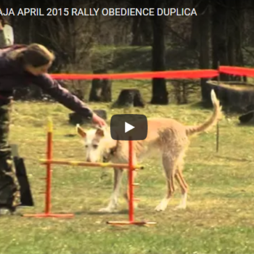 Rally obedience Duplica