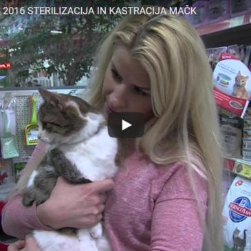 Sterilizacija in kastracija mačk