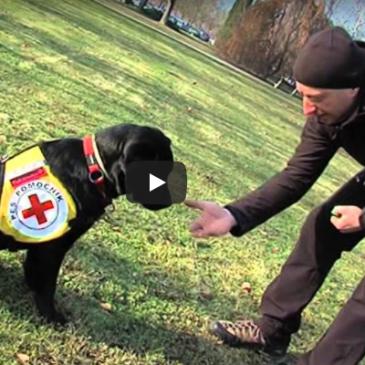 Šolanje psov pomočnikov