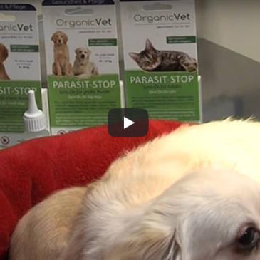 Veterinarski nasvet – zunanji zajedavci pri psih in mačkah