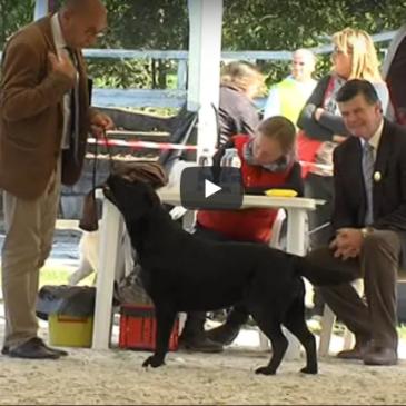Kotiček KZS – Razstava psov v Lipici