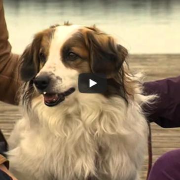 Pomoč živalim ob novoletnem pokanju petard Dorwest