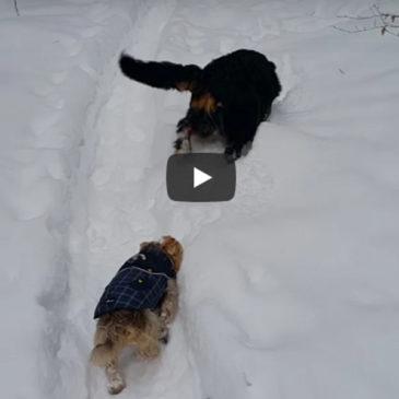 Oskrba in pravilna prehrana psov v zimskem času