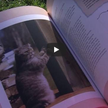 Priporočamo: knjiga Mačke