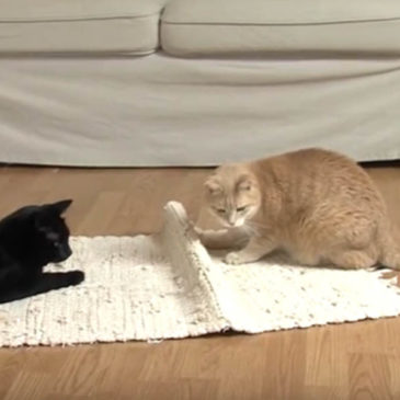 Pravilna prehrana mačk: Jani Kukec