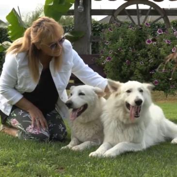Damjana Jugovic, vzrediteljica belih švicarskih ovčarjev