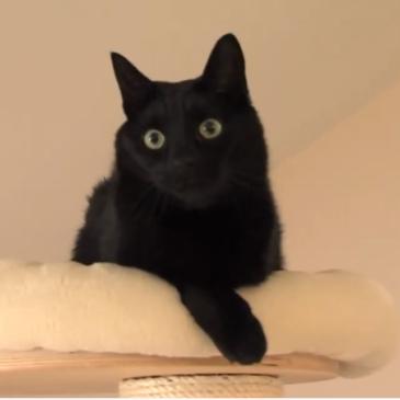 Jani Kukec – Mačke
