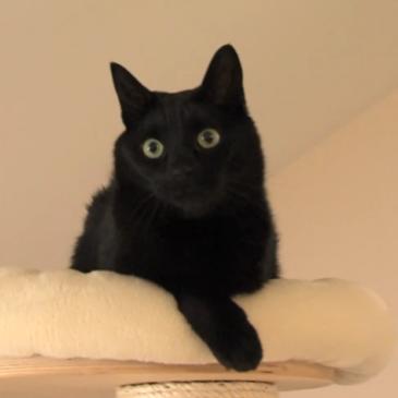 Pravilna prehrana mačk – Jani Kukec