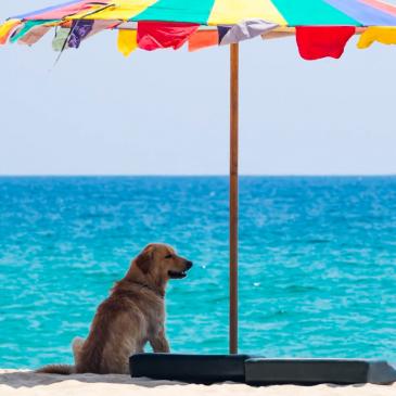 Veterinarski nasvet: S psom na dopust