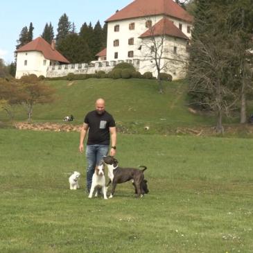 Prehrana psov – Tilen Drmota